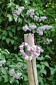 Heart-shaped wreath of lilac in front of lilac bush