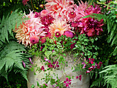 Summer bouquet of dahlias surrounded by clematis and ferns