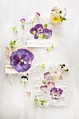 Dekoration mit Blüten von Hornveilchen und Stiefmütterchen
