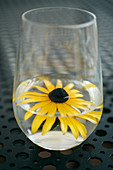 Yellow rudbeckia flower in glass of water