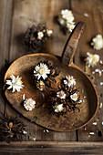 Everlasting flowers (Helichrysum) and Turkish hazel (Corylus Colurna) nut clusters