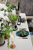 Set table decorated with potted houseplants and succulent leaves on plates