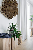 Staghorn fern on wooden blocks below cardboard artwork on wall