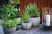 Potted herbs on terrace
