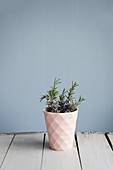 Flowering branches of rosemary in a pink cup