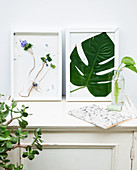 Framed arrangements of flowers and leaves