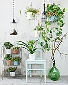 Arrangement of houseplants