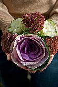 Hands holding bouquet of white and purple ornamental cabbage and sedums