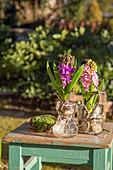 Hyacinths in bulb vases