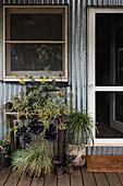 Eingangsbereich mit Pflanzen vor Wellblech-Fassade