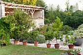 Row of potted citrus trees on stone paving in garden with an old barn
