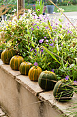 Row of pumpkins on terrace wall