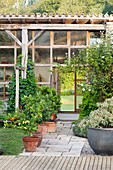 Potted citrus trees, paved path and conservatory in garden