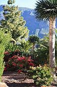 Palm trees, azaleas and pine trees in Mediterranean garden