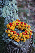 Wreath of yellow and red fruits from the strawberry tree