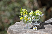 Small spring decoration with wood anemones, primroses, and spurges