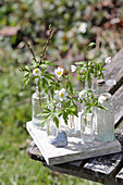 Wood anemones in glass bottles