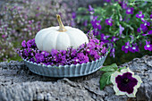 White pumpkin in a wreath of broom heather and sea lavender, petunia blossom