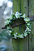 Wreath of box and double snowdrops on old door