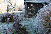 Frosty late-autumn garden with shed