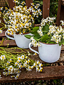 Chamomile flowers and flowering service tree twigs in enamel pots