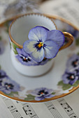 Blue viola in espresso cup with pattern of blue violas