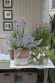 Arrangement with catmint, purple loosestrife, magic bells and ornamental onions in baskets