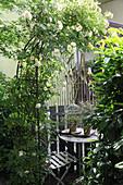 Hidden dining area between climbing rose and cherry laurel