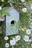 Bird nesting box surrounded by white climbing rose