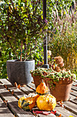 Ornamental squash on autumnal terrace