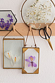 Pressed spring flowers in glass frames