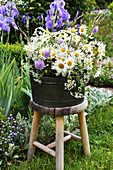 Bouquet of spring marguerite, widow flowers, grass and meadow cumin on stool in the garden