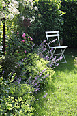 Chair at the bed with catmint, lady's mantle, box and rose 'Gertrude Jekyll' and rambler rose 'Guirlande d Amour'