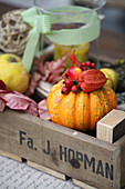 Autumn arrangement of pumpkin, rosehips, physalis seed pod and crab apples in wooden crate