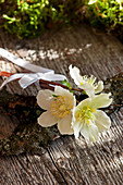 Small bouquet of Christmas rose blossoms