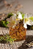 Christmas rose blossoms in a glass