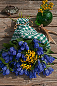 Closed gentian with tansy tied to a bouquet