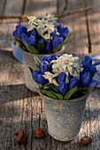 Closed Gentiana with edelweiss