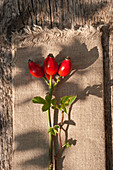 Branch with rose hips on cloth