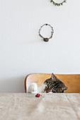 Katze am Tisch