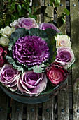 Purple ornamental cabbage in circle of smaller ornamental cabbages