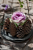 Ornamental cabbage covered with cones