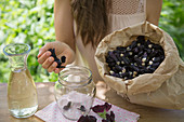 Preparing hollyhock wine: put dried hollyhock flowers in a jar