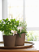 Potted herbs with DIY modelling clay plant labels