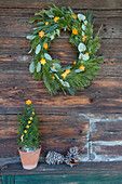 Christmas wreath and potted miniature conifer decorated with shapes cut out of orange peel