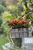 Posies of rose hips and chrysanthemums in tin cans hung from apple tree in wire basket
