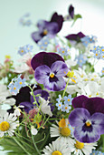 Spring flowers: violas, daisies, forget-me-nots and lady's smock