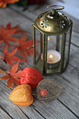 Lanterns, physalis pods and maple leaves