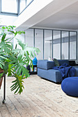 A potted plant and a blue sofa set in an open-plan living room