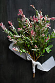 Posy of dappled willow with pink variegated leaves